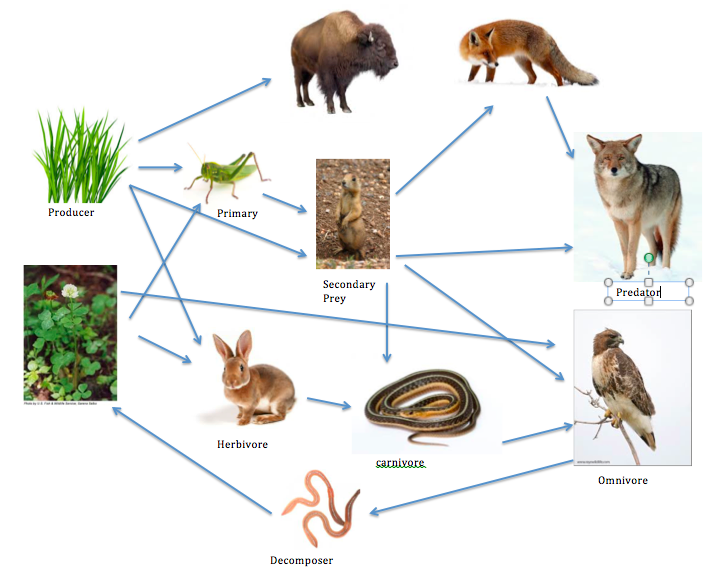 Make Your Own Food Web Game